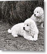 Great Pyramise Pups Metal Print