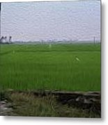 Green Fields With Birds In Kerala Metal Print