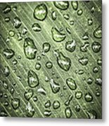 Green Leaf With Raindrops Metal Print