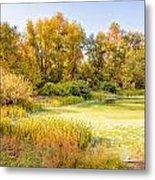 Green Pond And Tree Metal Print