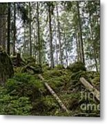 Green Untouched Forest Metal Print