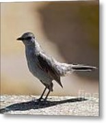 Grey Catbird Metal Print