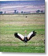 Grey Crowned Crane. The National Bird Of Uganda Metal Print