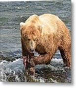 Grizzly Bear Salmon Fishing Metal Print