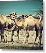 Group Of Camels In Africa Metal Print