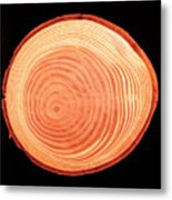 Growth Rings Of Larch Tree Metal Print
