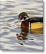 Handsome Wood Duck Metal Print