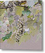 Hanging Thompson Grapes Sultana Metal Print