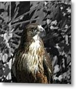 Hawk Of Prey Metal Print