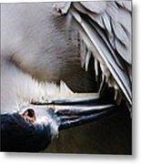 Heron Feathers Metal Print