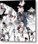 Highland Frost Metal Print