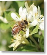 Honeybee And Honeysuckle Metal Print