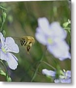 Honeybee At Work  Metal Print