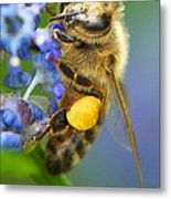Honeybee On California Lilac Metal Print