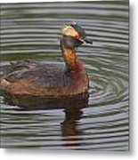 Horned Grebe Metal Print