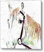 Horse Study Metal Print
