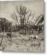 Horses And Barn Metal Print