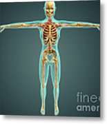 Human Body Showing Skeletal System Metal Print