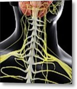 Human Brain And Spinal Cord Metal Print