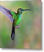 Hummingbird , Green-crowned Brilliant Metal Print