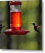 Hummingbirds 336 Metal Print
