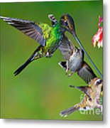 Hummingbirds At Feeder Metal Print