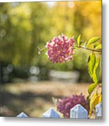 Hydrangeas In The Autumn Sun Metal Print