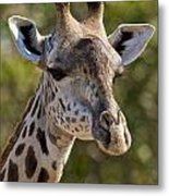 I'm All Ears - Giraffe Metal Print