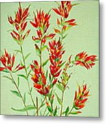 Indian Paintbrush Metal Print
