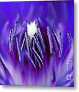 Inside A Flower Metal Print