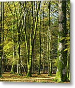 Interior Of Beech Tree Forest Metal Print