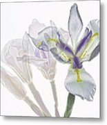 Iris Evolution Metal Print