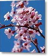 Japanese Cherry Tree Metal Print