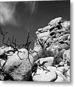 Joshua Tree 2 Metal Print