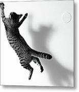 Jumping Cat Metal Print