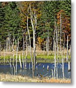 Kimsey Lake Metal Print