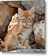 Kitten In Hydra Island Metal Print