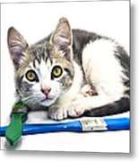 Kitten With Paint Brushes Metal Print
