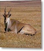 Eland Antelope In Kenya Metal Print