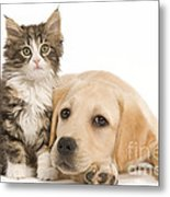 Labrador And Forest Cat Metal Print