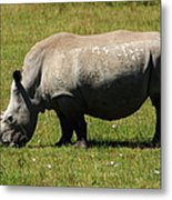 Lake Nakuru White Rhinoceros Metal Print
