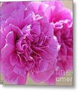 Lavender Carnations Metal Print