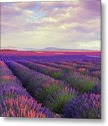 Lavender Field At Dusk Metal Print