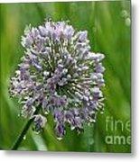 Lavender Globe Lily Metal Print