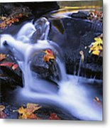 Leaves In Little River Great Smoky Metal Print