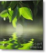 Leaves Over Water Metal Print