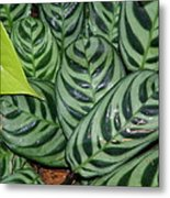 Light And Dark Green Leaves Metal Print
