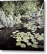 Lily Pads On Dark Water Metal Print