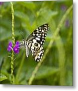 Lime Butterfly Metal Print