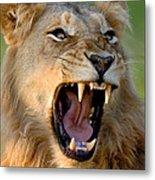 Lion Metal Print by Johan Swanepoel